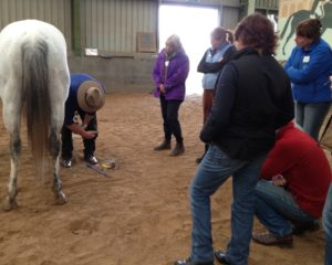Practitioner Hoof Care